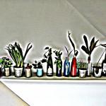 植物たち。